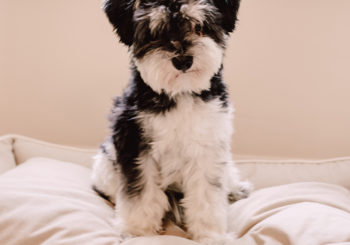 our favorite puppy products