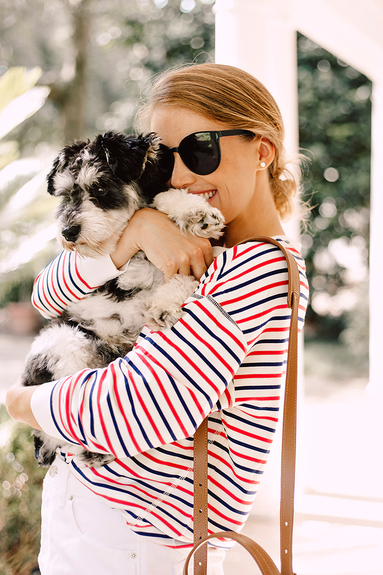 red and blue striped top, miniature schnauzer